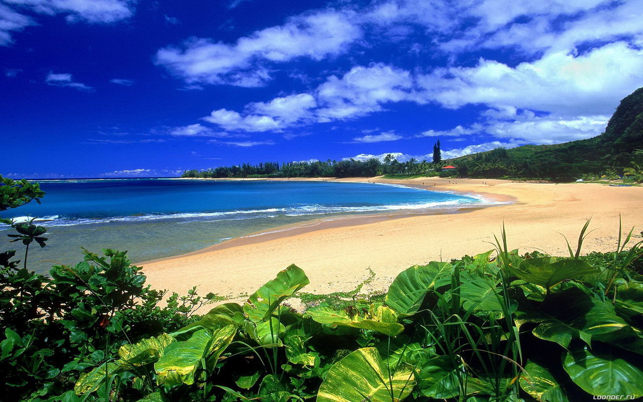 hawaii-beach-wallpaper